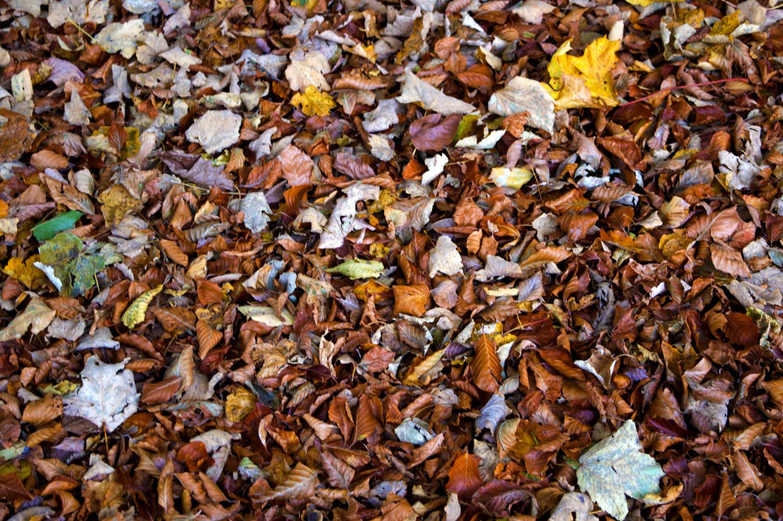 Il colore delle foglie