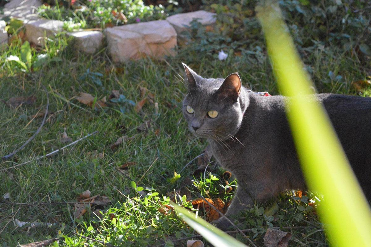 Fotografia felini
