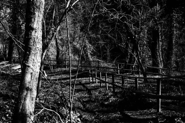 Il parco in bianco e nero