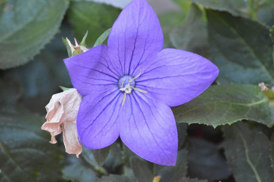 fotografia macro fiore
