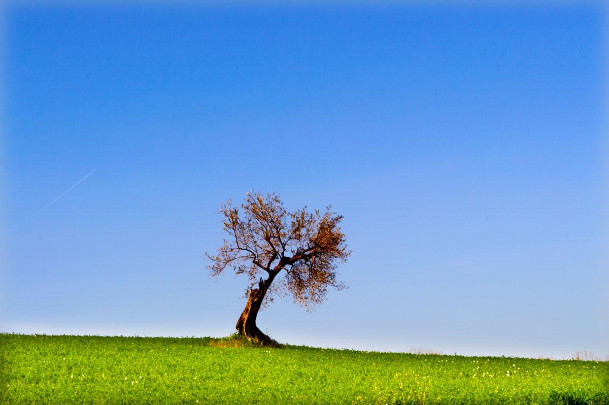 Scattoingrandangolo albero